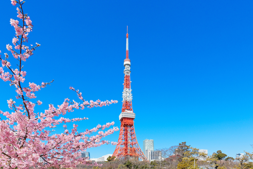 Tokyo Tower with cherry tree in bloom